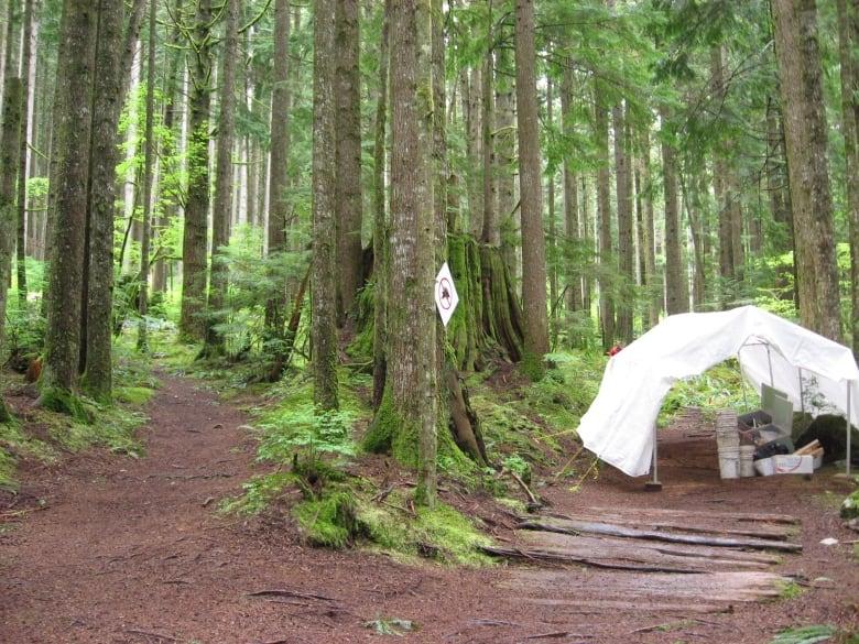 右の道が日本人入植者によって杉板で舗装された道